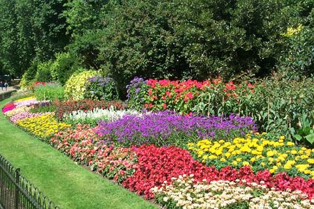 схемы клумб и цветников.