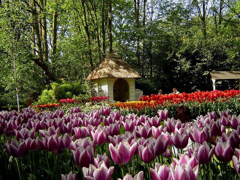 Keukenhof_Tulip_Gardens