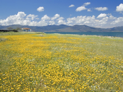 Roy-rainford-field-of-wild-flowers-in-spring-lesbos-eastern-islands-greece-europe