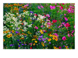 Richard-ianson-colourful-wildflowers_-usa