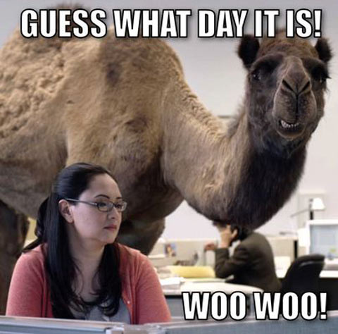 Funny-camel-hump-day-woman